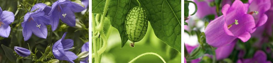 New Varieties for 2020 - National Garden Bureau