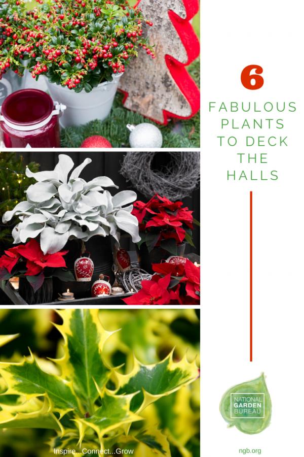 6 Fabulous Plants to Deck the Halls - National Garden Bureau