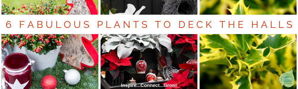 6 Fabulous Plants to Deck the Halls - National Garden Bureau