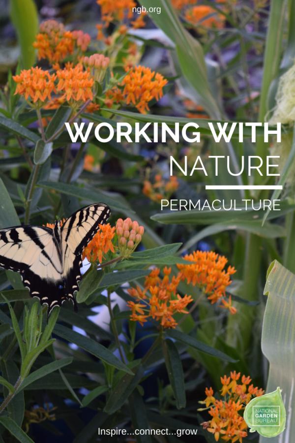 5 Ways to Incorporate Permaculture Into Your Garden - National Garden Bureau