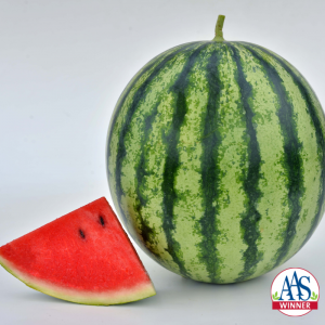 Watermelon Mambo - New AAS Winner for your garden