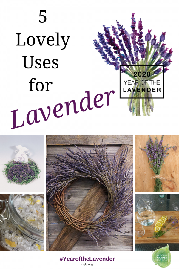 5 lovely uses of Lavender - Year of the Lavender - National Garden Bureau