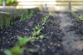 Seedlings appear from a seed mat - National Garden Bureau