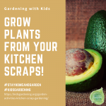 Grow Plants from your Kitchen Scraps - National Garden Bureau