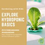 Explore Hydroponic Basics - National Garden Bureau