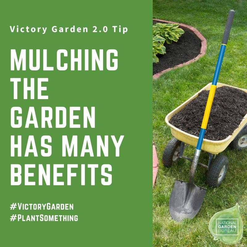 Victory Garden 2.0 - Ten Steps for Planting Outdoors - National Garden Bureau