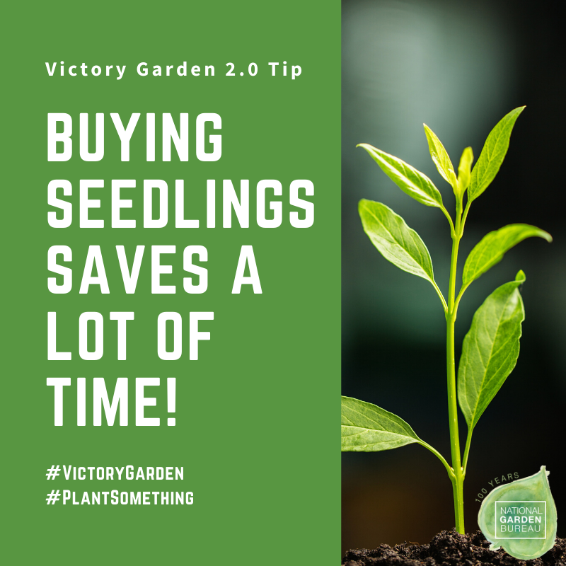 Buying Seedlings in the Spring can save a lot of time in your Victory Garden - National Garden Bureau