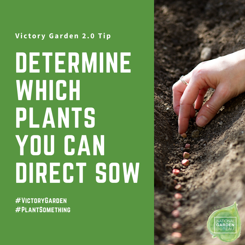 Determine which plants you can direct sow into your Victory Garden - National Garden Bureau