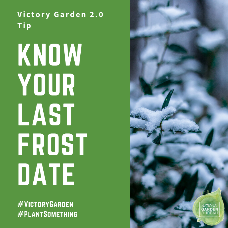 Know your last frost date when planning your Victory Garden - National Garden Bureau