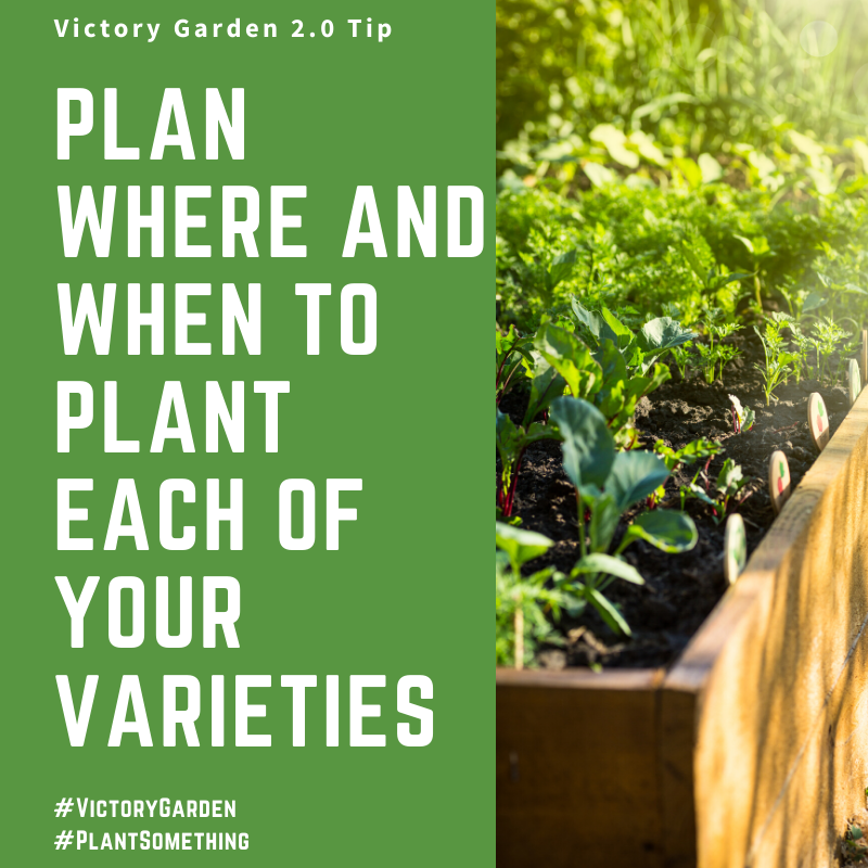 Plan where and when to plant each of your varieties in your Victory Garden - National Garden Bureau
