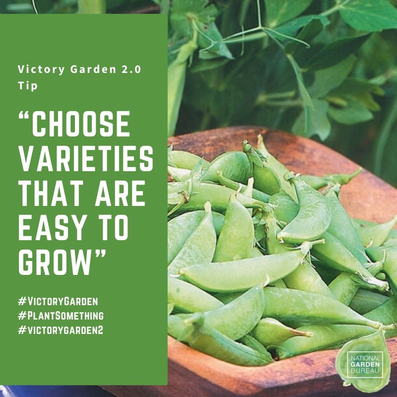 Choose Varieties that are easy to grow in your Victory Garden - National Garden Bureau