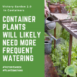 Water Your Container Plants Frequently - 10 tips for planting your Victory Garden 2.0 in a container - National Garden Bureau