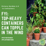 Top-Heavy Containers can Topple in the Wind - 10 tips for Victory Garden 2.0 container gardening