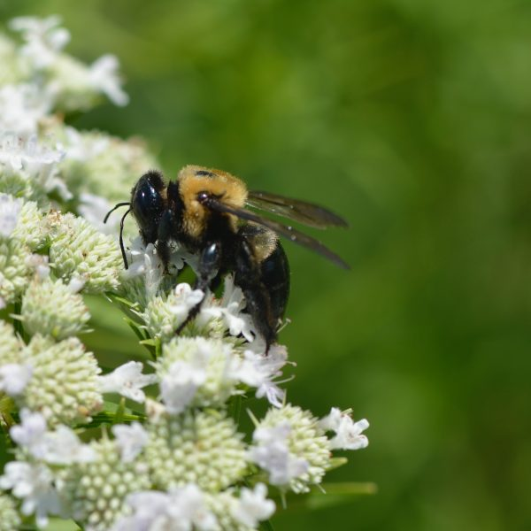 Pollinator Victory Garden 2.0 - Learn how to plant your own - National Garden Bureau
