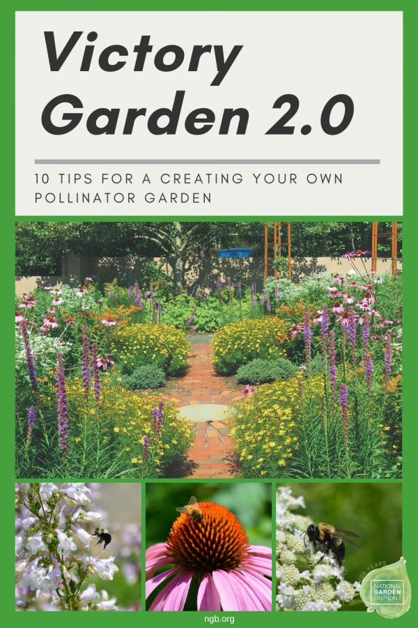 10 tips for planting your own Pollinator Victory Garden 2.0 - Learn how to help the pollinators - National Garden Bureau
