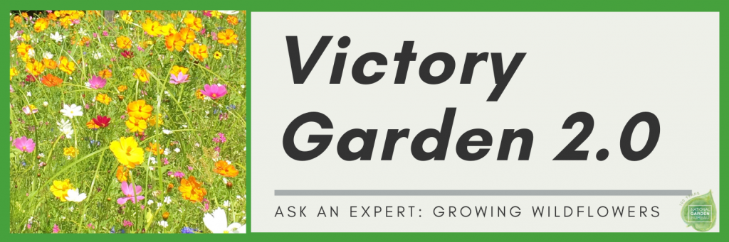 Growing Wildflowers in your Victory Garden 2.0 - National Garden Bureau