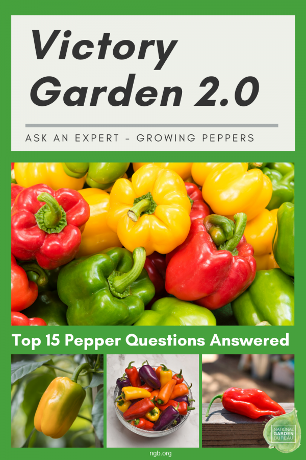 Ask An Expert - Growing Peppers in your Victory Garden 2.0