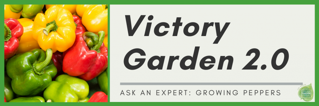 Ask An Expert about Growing Peppers for your Victory Garden 2.0