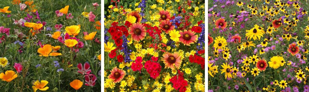 15 FAQ on growing your own wildflowers - National Garden Bureau