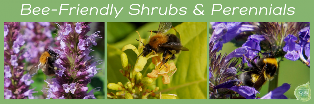 Bee-Friendly Shrubs & Perennials for your Pollinator Garden - National Garden Bureau