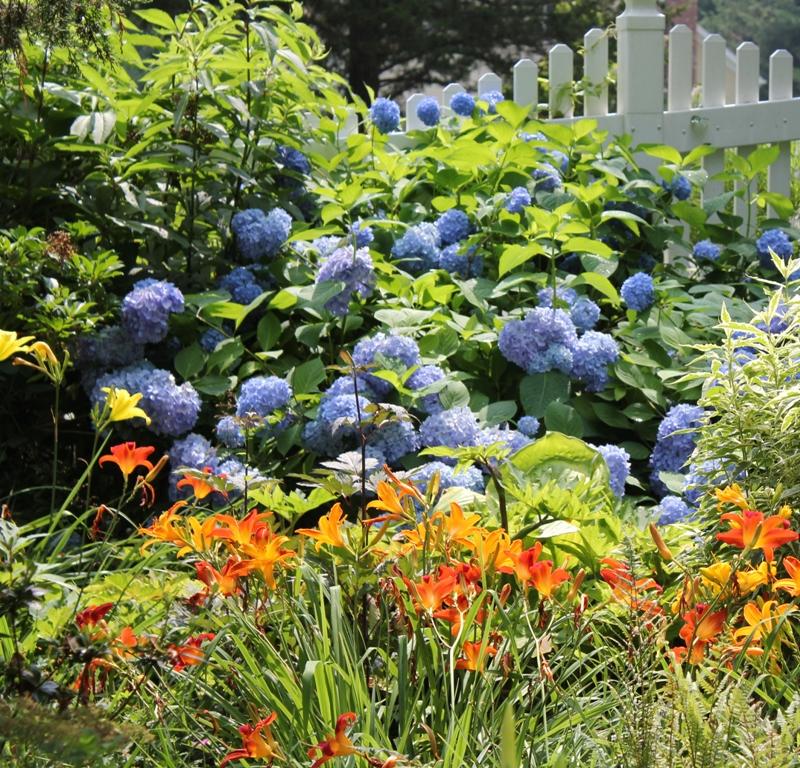 Hydrangea Checklist Time - National Garden Bureau