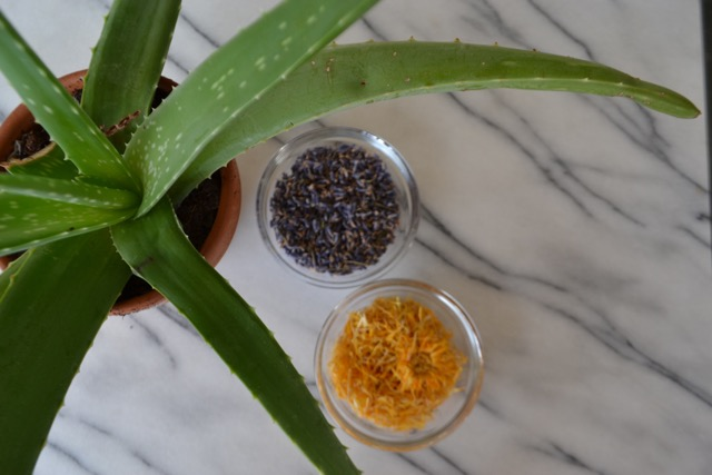 Easy to Make Lavender Calendula Gel Recipe for the Year of the Lavender - National Garden Bureau