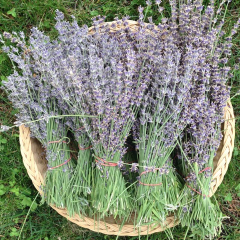 Easy to make Relaxing Lavender Oatmeal Soak Recipe - Year of the Lavender - National Garden Bureau