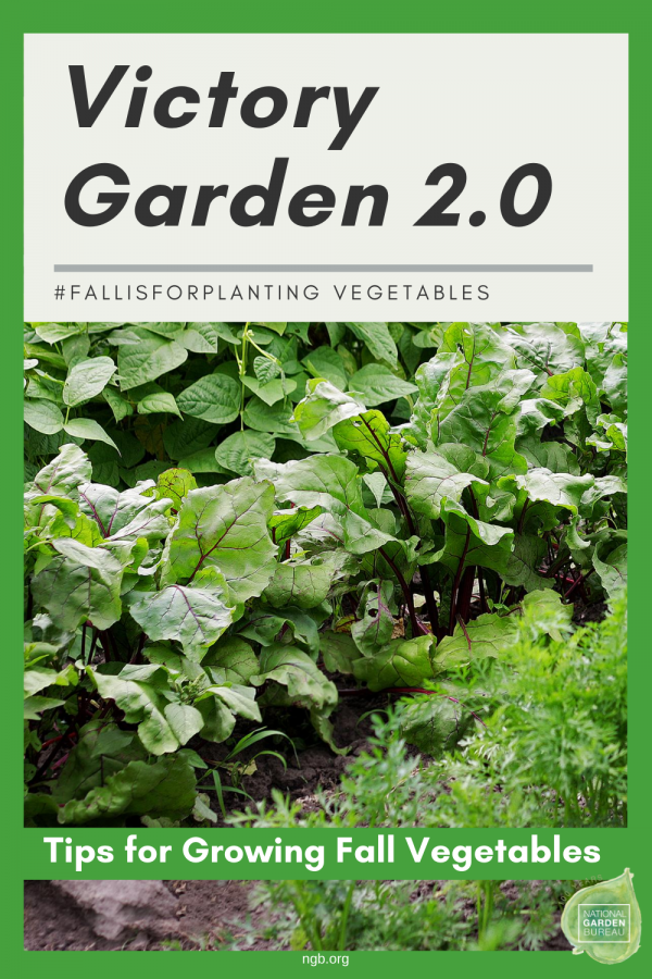 Victory Garden 2.0 #FallisforPlanting Vegetables! Tips to grow your fall vegetables successfully! National Garden Bureau
