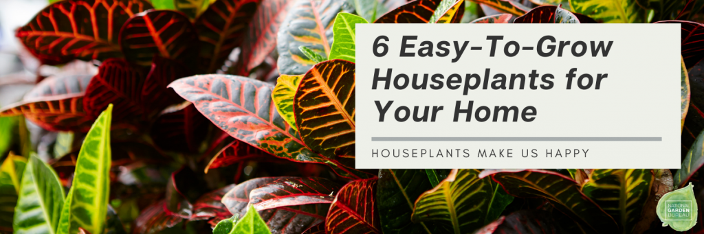 6 Easy-To-Grow Houseplants for Your Home - National Garden Bureau