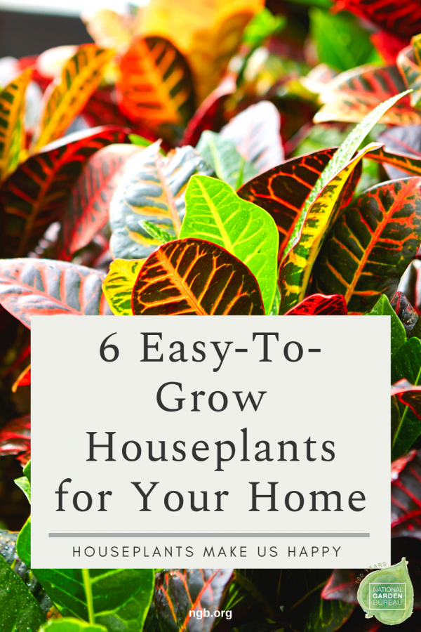 6 Easy-To-Grow Houseplants for your Home - National Garden Bureau #houseplants