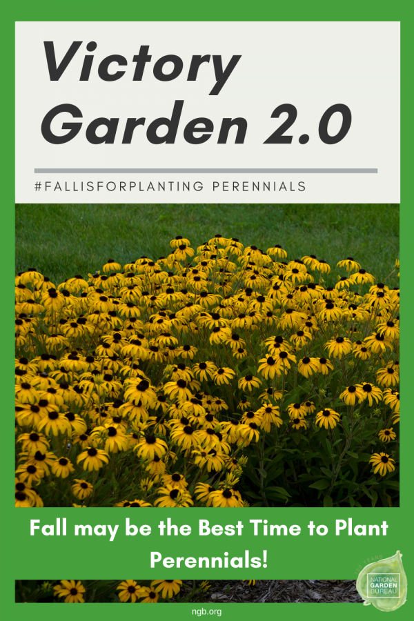 Victory Garden 2.0 #fallisforplanting Perennials - 6 tips on why Fall is the perfect time to plant your perennials - National Garden Bureau
