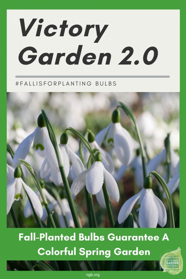 Planting Fall bulbs guarantee a colorful spring garden - #fallisforplanting bulbs - National Garden Bureau