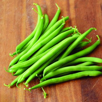 Antigua from Territorial Seed Company - Year of the Garden Bean - National Garden Bureau