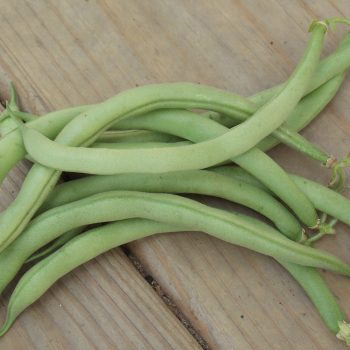 Contender from Jung Seed - Year of the Garden Bean - National Garden Bureau