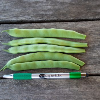 Forrester from Pure Line - Year of the Garden Bean - National Garden Bureau