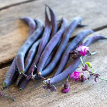 Improved Purple Queen from Pure Line - Year of the Garden Bean - National Garden Bureau