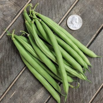 Sassy from Pure Line - Year of the Garden Bean - National Garden Bureau