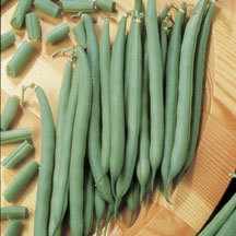 Top Crop from All-America Selections - Year of the Garden Bean - National Garden Bureau