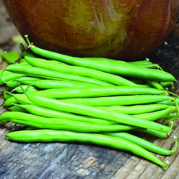 Wyatt from Territorial Seed Company - Year of the Garden Bean - National Garden Bureau