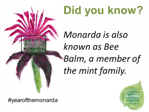 Monardo is also known as Bee Balm, a member of the mint family - Year of the Monarda - National Garden Bureau