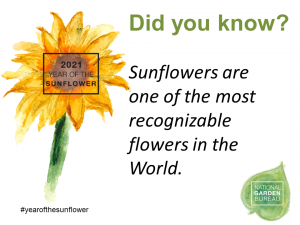 Sunflowers are one of the most recognizable flowers in the world - Year of the Sunflower - National Garden Bureau