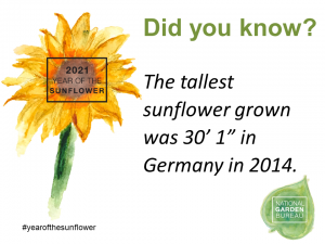 "Did you know the tallest sunflower grown was 30'1"" in Germany in 2014 - Year of the Sunflower - National Garden Bureau"