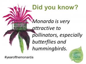 Monarda is very attractive to pollinators, especially butterflies and hummingbirds - Year of the Monarda - National Garden Bureau