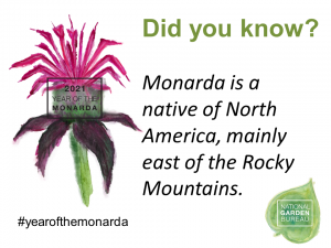Monarda is a native of North American, mainly east of the Rocky Mountains - Year of the Monarda - National Garden Bureau