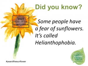 Some people have a fear of sunflowers. It's called Helianthophobia - Year of the Sunflower - National Garden Bureau