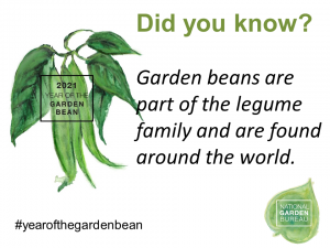 Garden Beans are part of the legume family and are found around the world - Year of the Garden Bean - National Garden Bureau