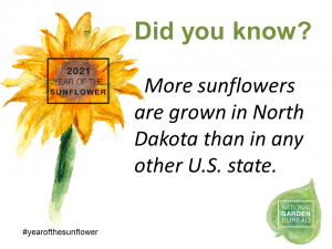 More sunflowers are grown in North Dakota than in any other U.S. state - Year of the Sunflower -- National Garden Bureau