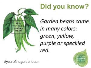 Garden Beans come in many colors: green, yellow, purple or speckled red. - year of the garden bean - National Garden Brueau