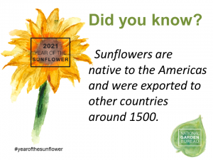 Sunflowers are native to the Americans and were exported to other countries around 1500 - Year of the Sunflower - National Garden Bureau