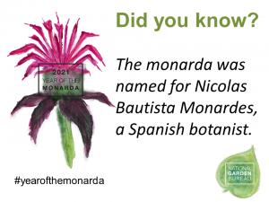 The monarda was named for Nicolas Bautista Monardes, a Spanish botanist - Year of the Monarda - National Garden Bureau